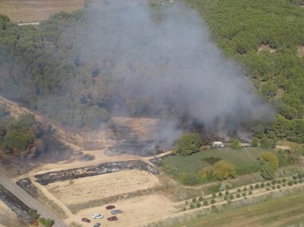 Un incendio calcina 4.500 metros cuadrados de pinar en el municipio de Almuniente
