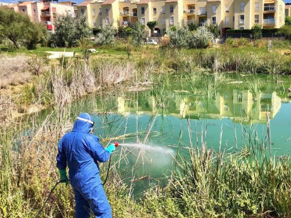 Segunda víctima mortal del virus del Nilo, que afecta a 38 personas