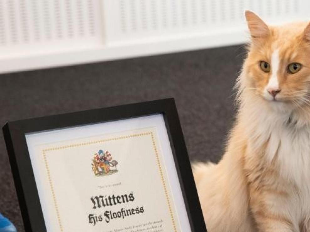 Un gato influyente compite contra Jacinda Ardern como neozelandés del año