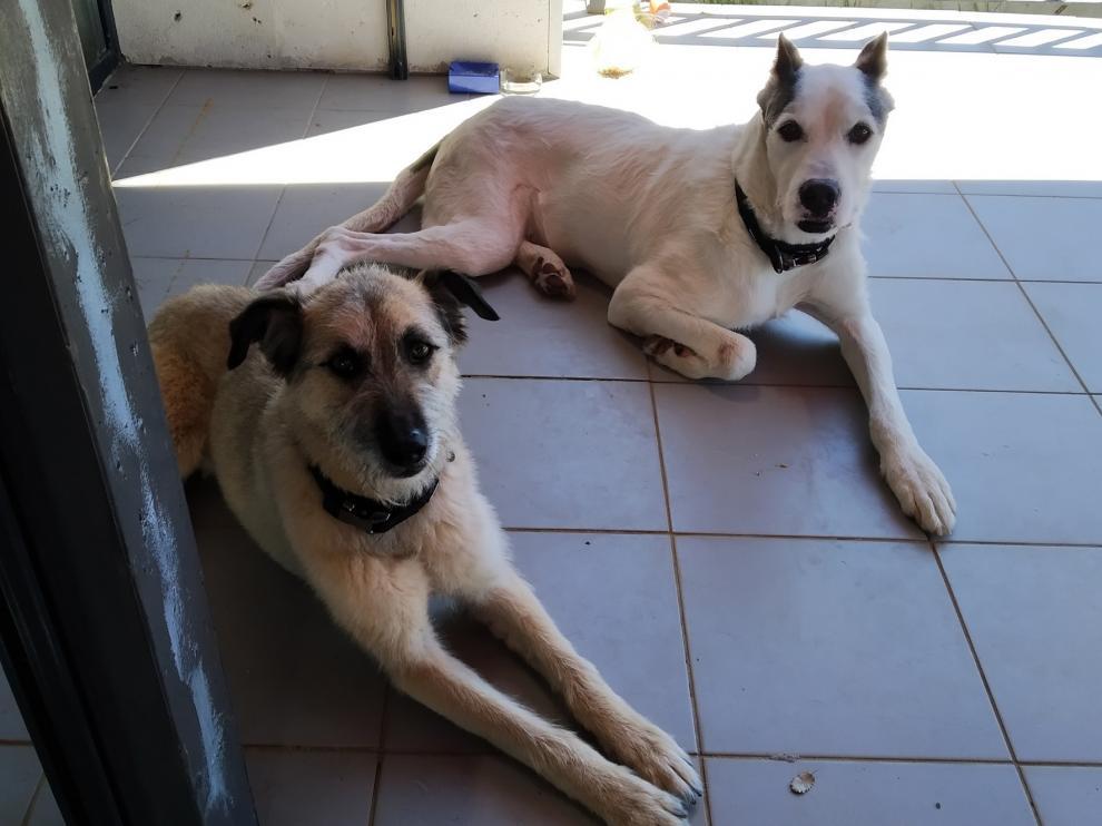"""Perros en busca de una """"nueva normalidad"""" junto a una familia"""
