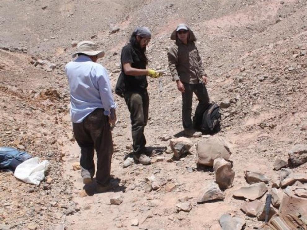 Identifican dos reptiles marinos que moraron en el desierto de Atacama