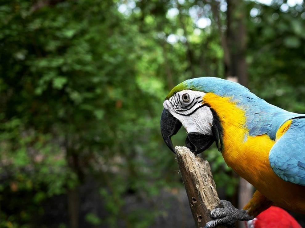 El cambio climático aleja a las especies de los trópicos