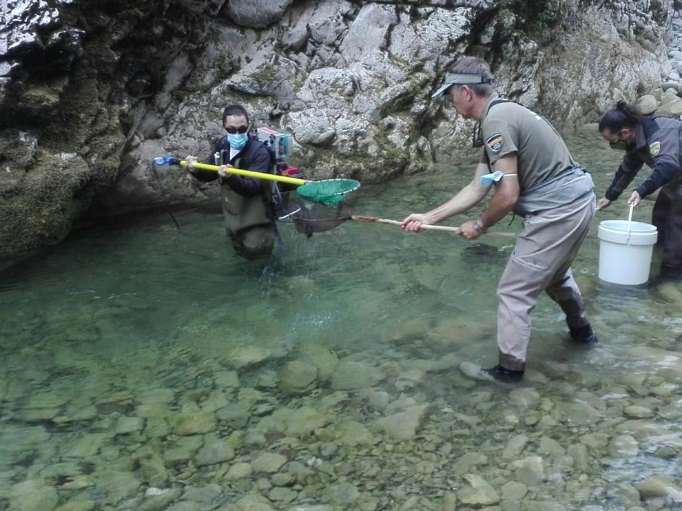 Rescatan varios centenares de peces en el río Veral, a la altura de la Foz de Biniés