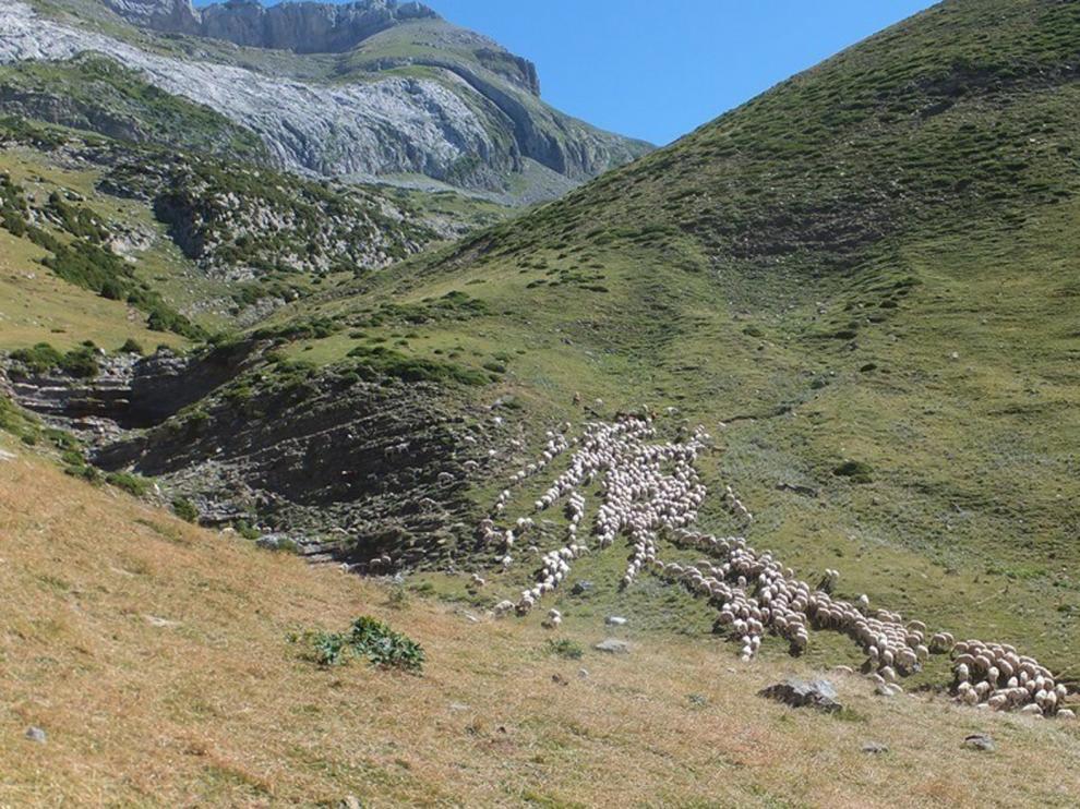 """El bosque """"recoloniza"""" los pastos de montaña por la caída de la ganadería"""