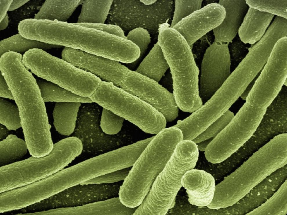 Un estudio vincula muchas enfermedades con la composición de las bacterias intestinales