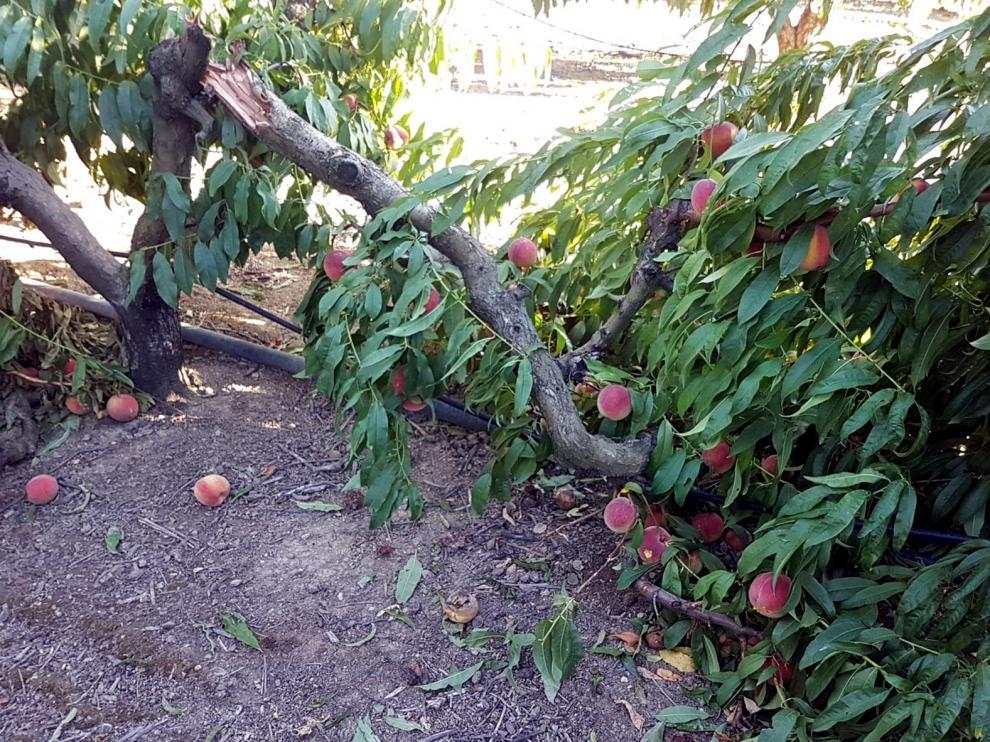 El granizo daña frutales en Fraga y Torrente de Cinca