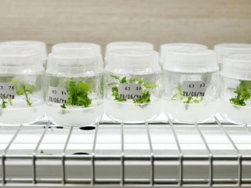 El PDR subvenciona 27 nuevos proyectos de innovación y cooperación en el sector agroalimentario