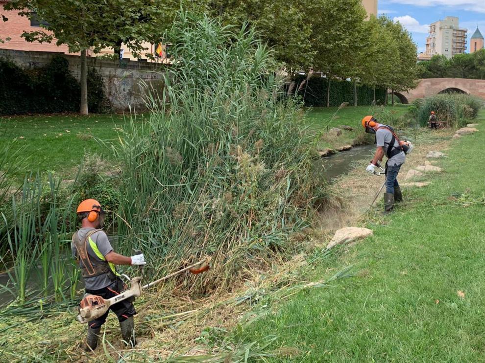 El Ayuntamiento de Monzón comienza la limpieza del río Sosa