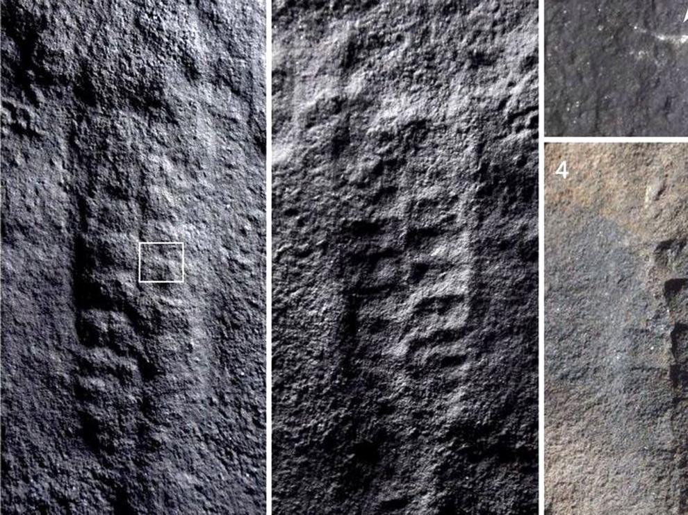 Hallan fósiles de animales con forma de hoja en China