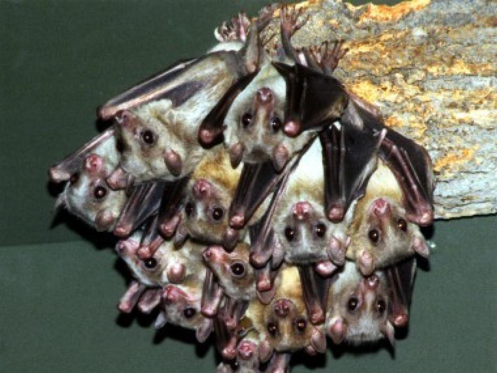 La valiosa función de los murciélagos en el ecosistema