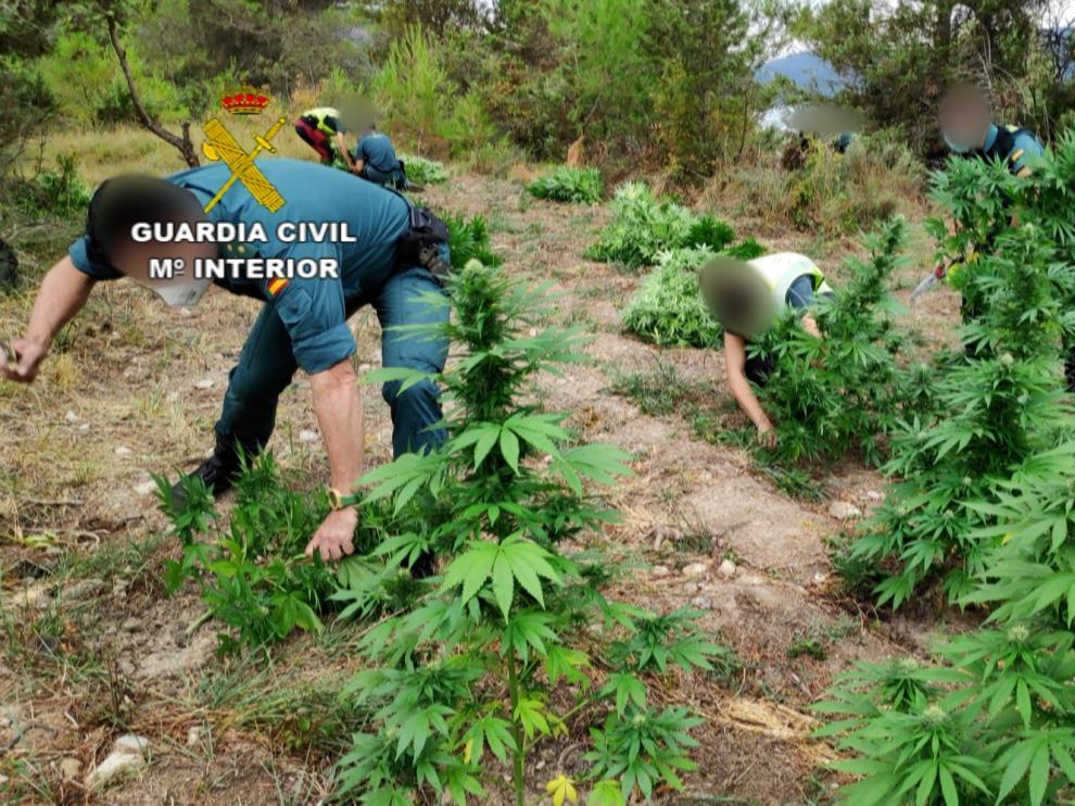 La Guardia Civil incauta más de una tonelada y media de marihuana en la Ribagorza y detiene a una persona