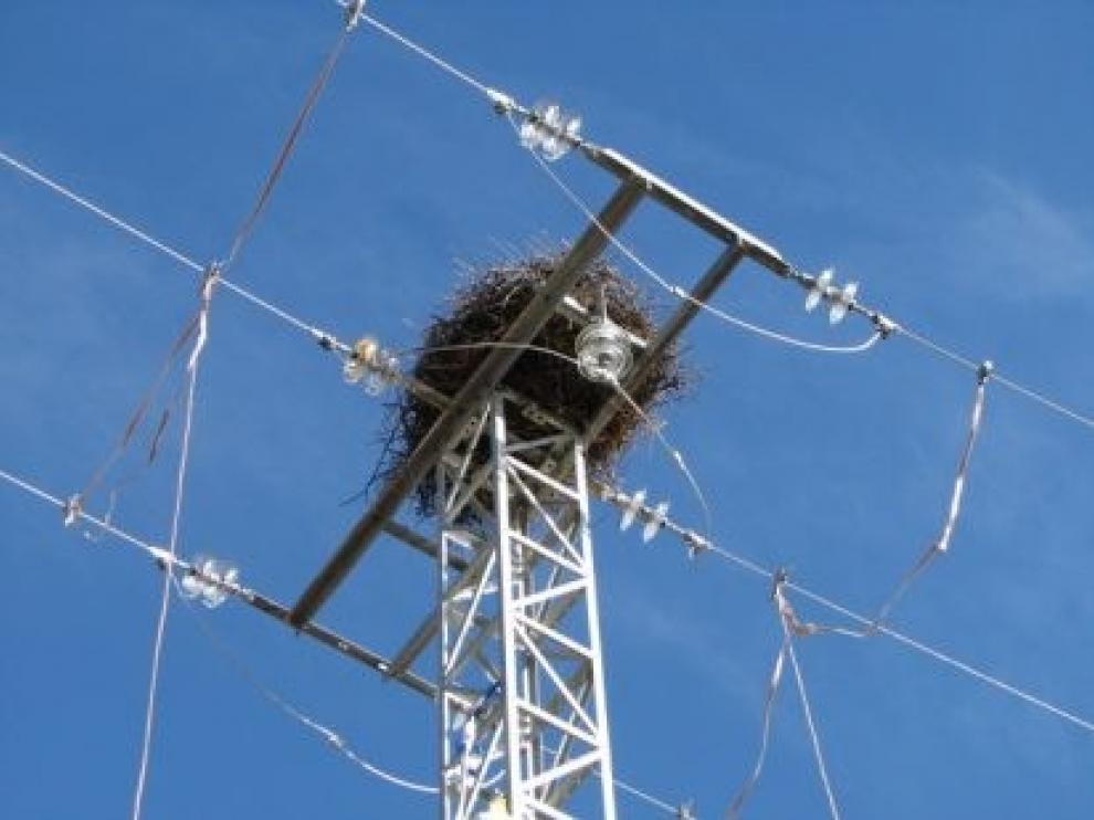 Los tendidos eléctricos, principal causa de muerte para las aves rapaces
