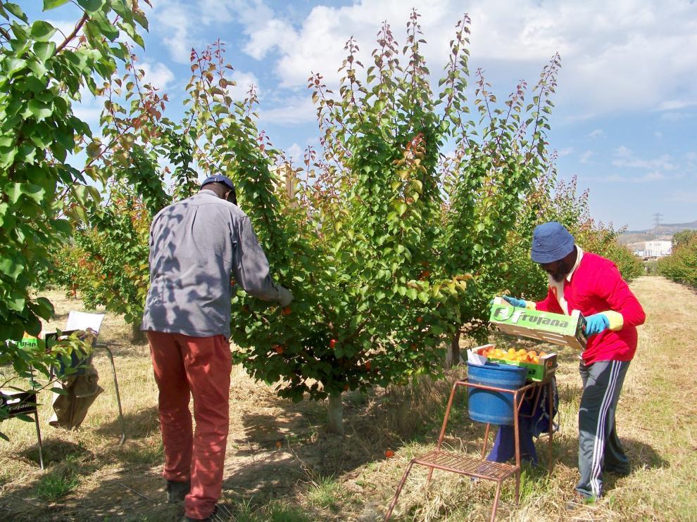 Aragón ultima la campaña de la fruta para evitar que sea un foco de contagios de covid