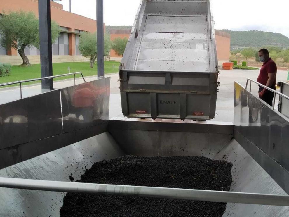 La DO Somontano reduce su producción de uva este año un 28 %