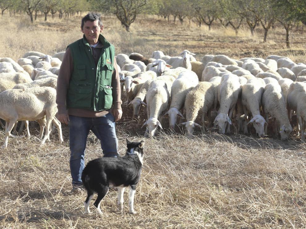 """José Luis Grasa: """"Si cuidas las ovejas, te van a dar, y con mejora genética, mucho más"""""""