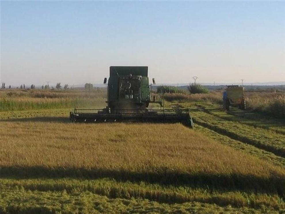 La contratación laboral en agricultura e industria gana peso
