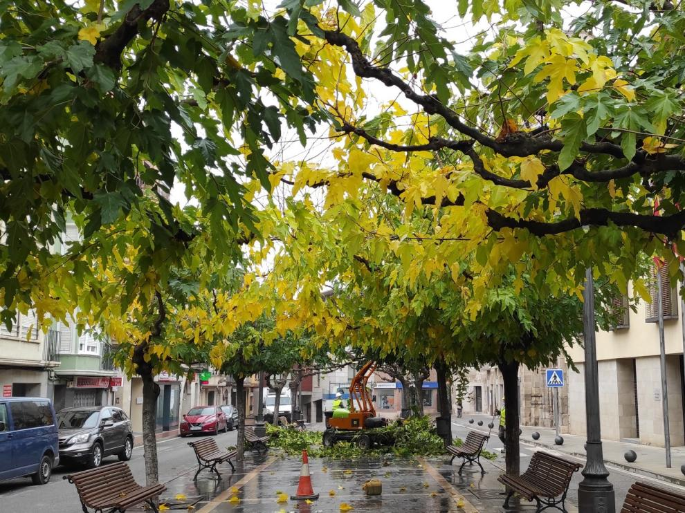 El retraso en la poda muestra la otra cara del Cegonyer de Fraga con las hojas de los árboles amarillas