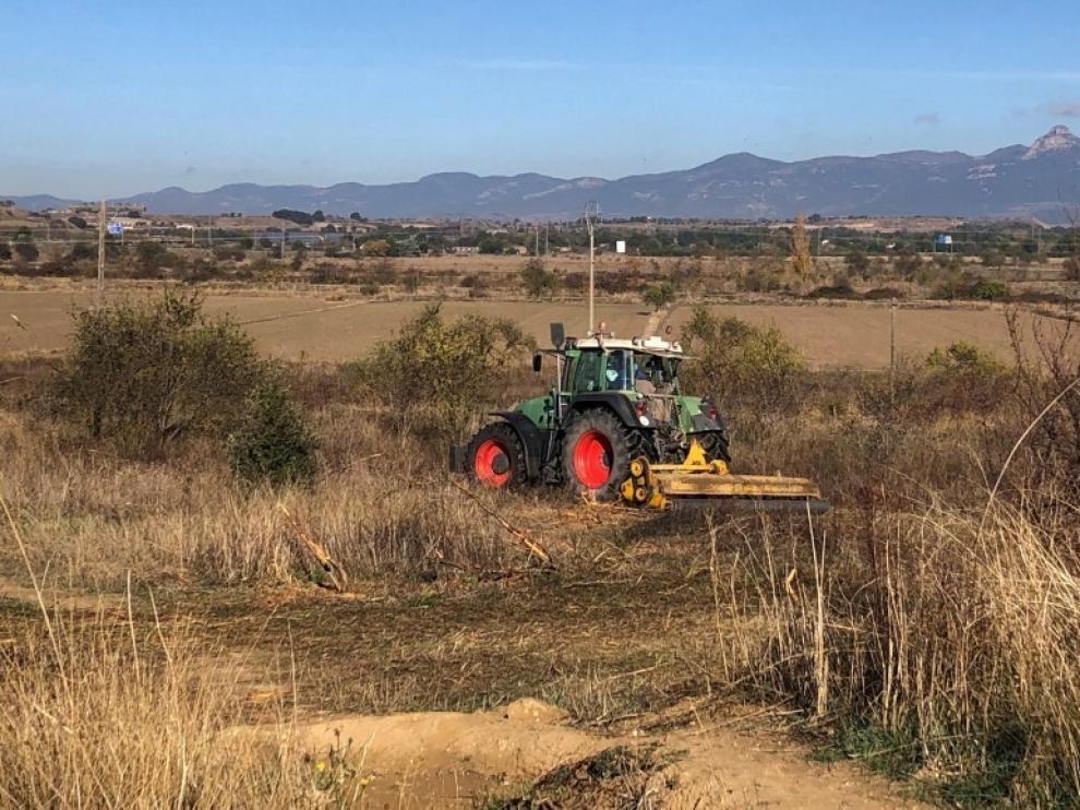 Inicio de la repoblación en el cerro de San Jorge de Huesca