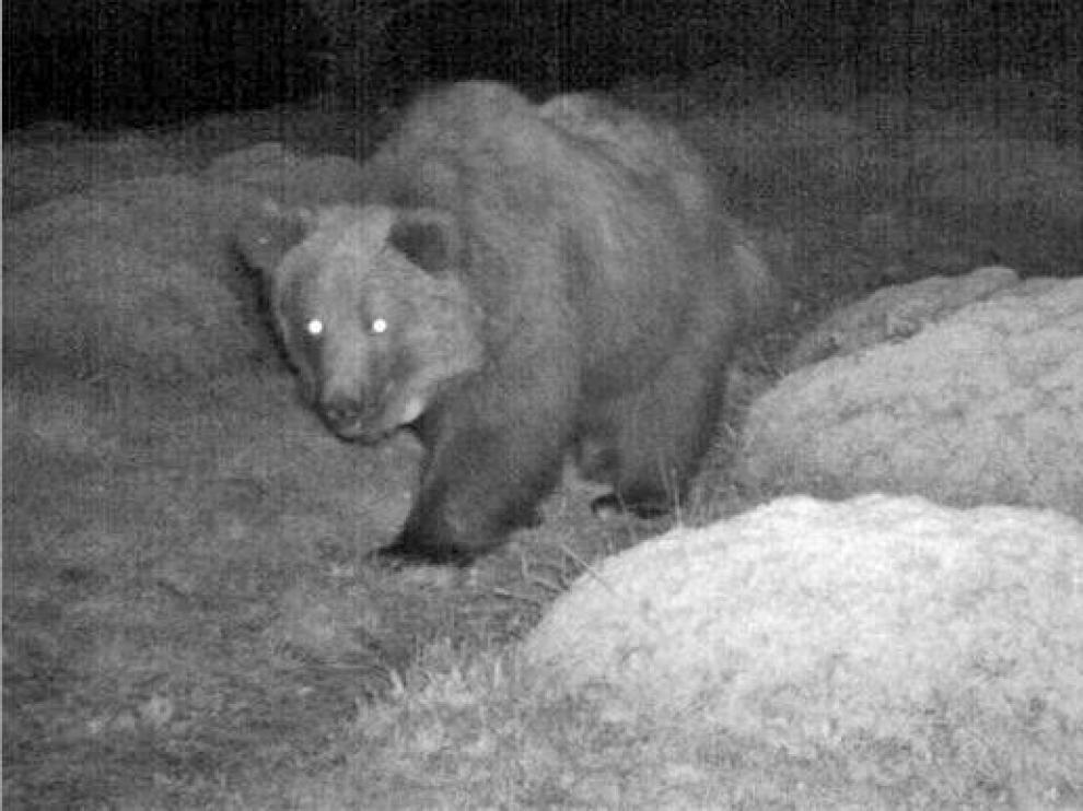 Los grupos ecologistas exigen medidas cautelares con la actividad de la caza en Aragón
