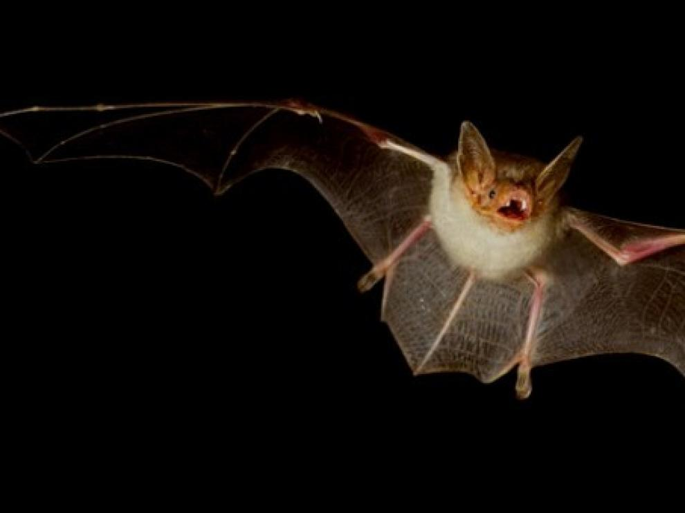 Descubren una especie fósil de murciélago de 16 millones de años de antigüedad
