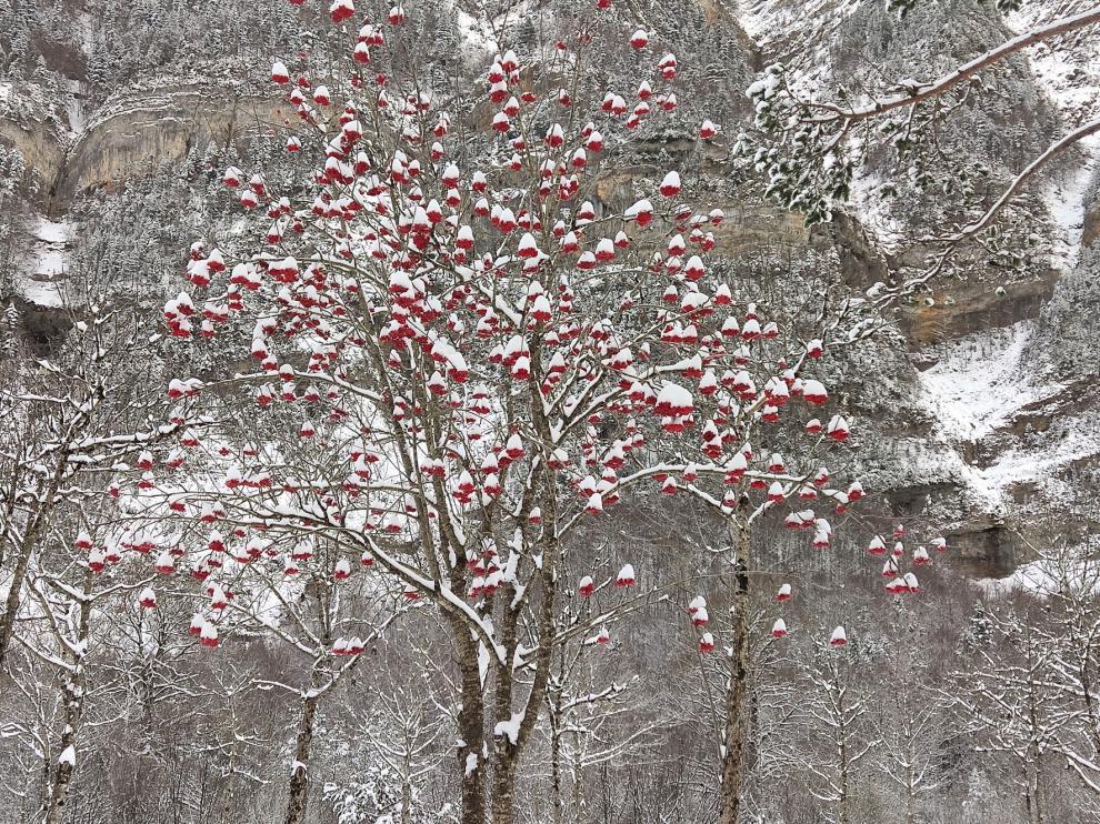 Vuelve la nieve a la provincia