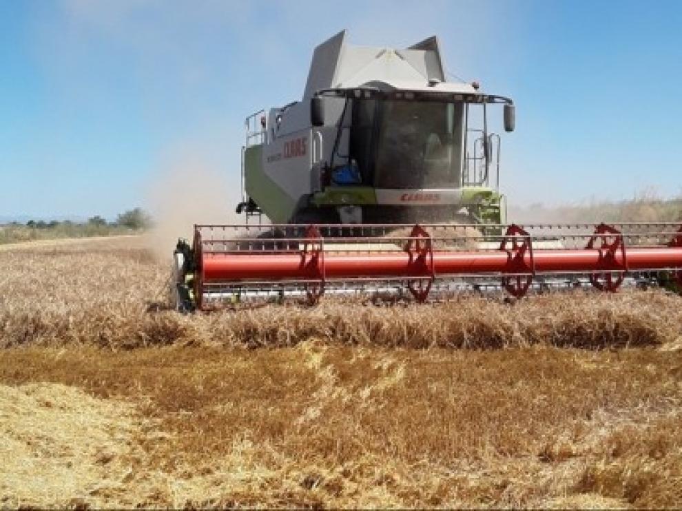Nace una plataforma digital para vender y comprar cereal ecológico