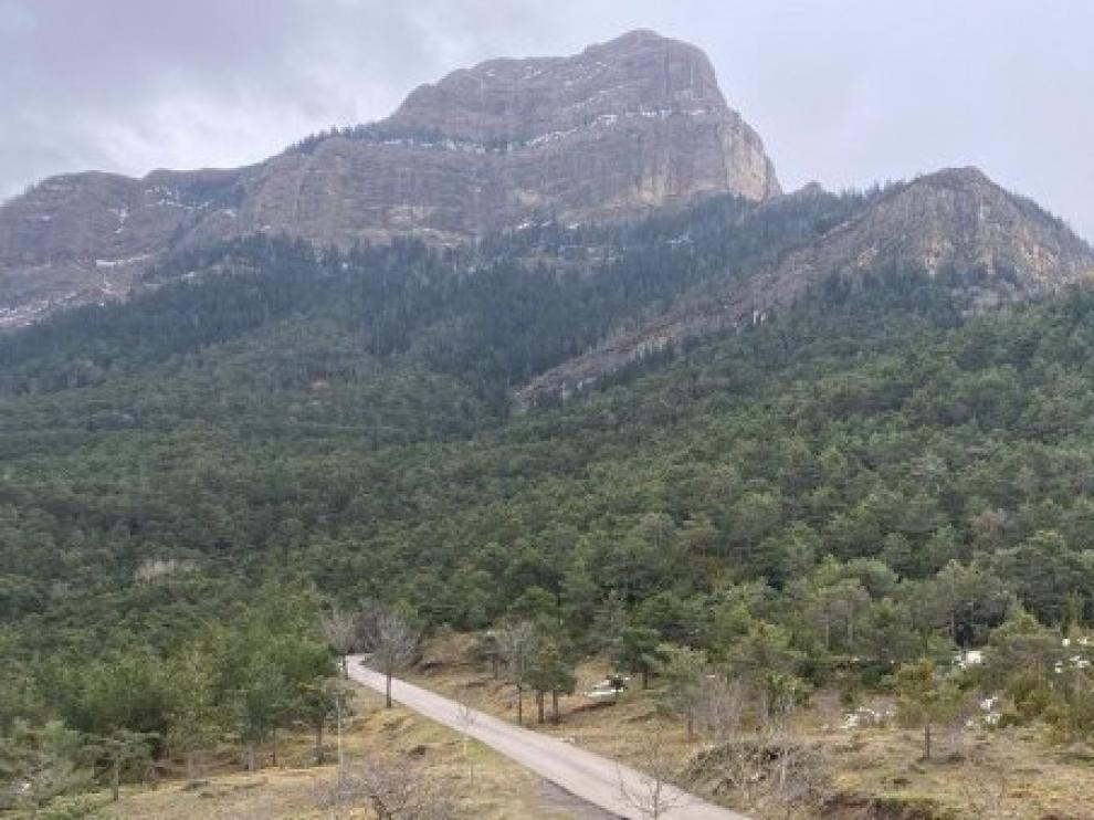 Jaca recibe el proyecto de ordenación forestal del monte Oroel