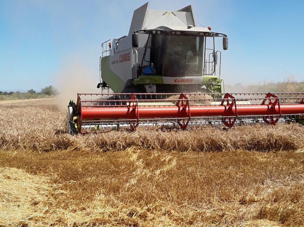 Aragón abona a los agricultores aragoneses 123,7 millones de euros de la PAC