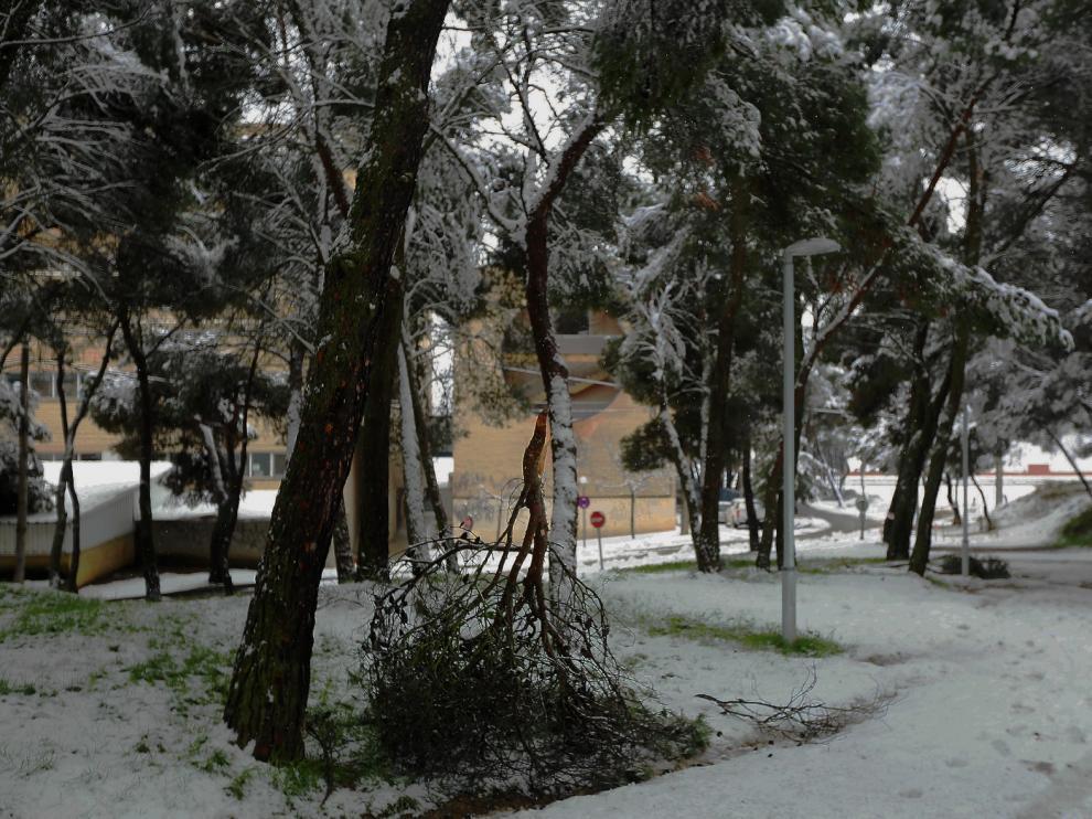 El Ayuntamiento de Huesca cierra finalmente todos los parques y zonas arboladas de la ciudad