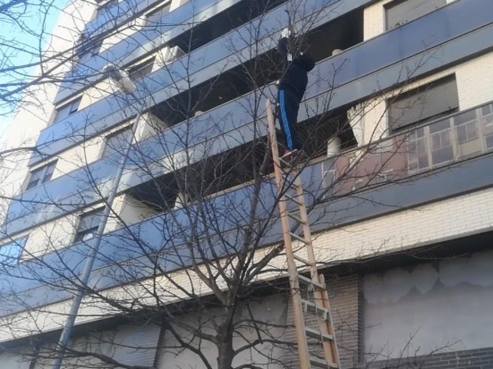 Rescatado por los vecinos un gato que llevaba tres días en un árbol de la calle Alcañiz de Huesca