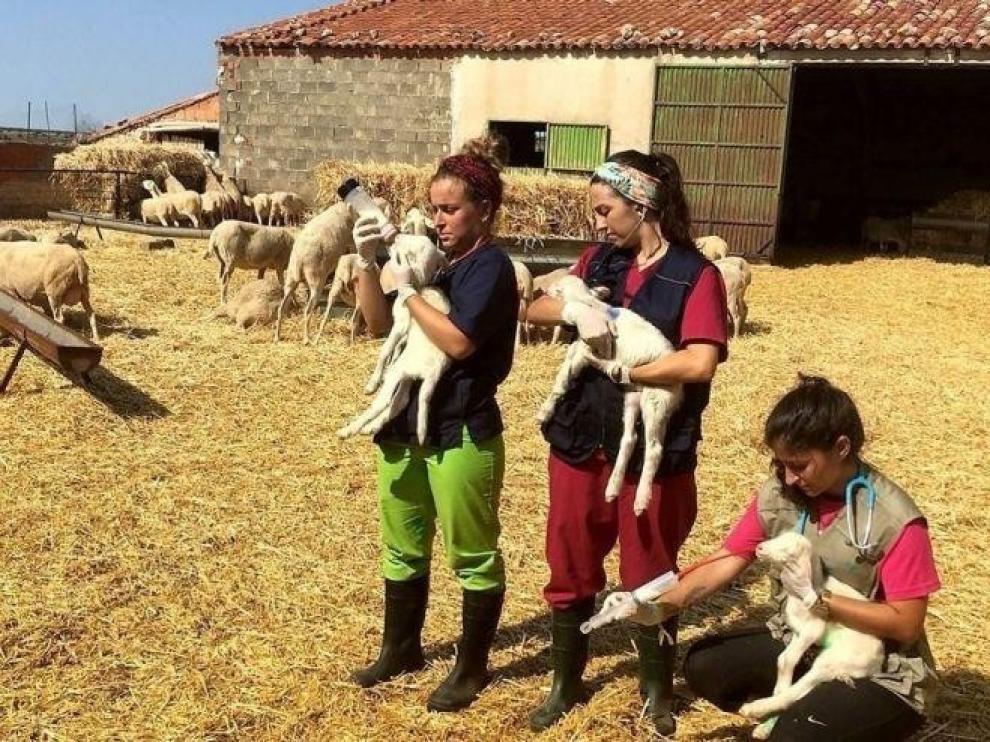 Ciudadanos pide extender el 'Erasmus Rural' a las tres provincias aragonesas