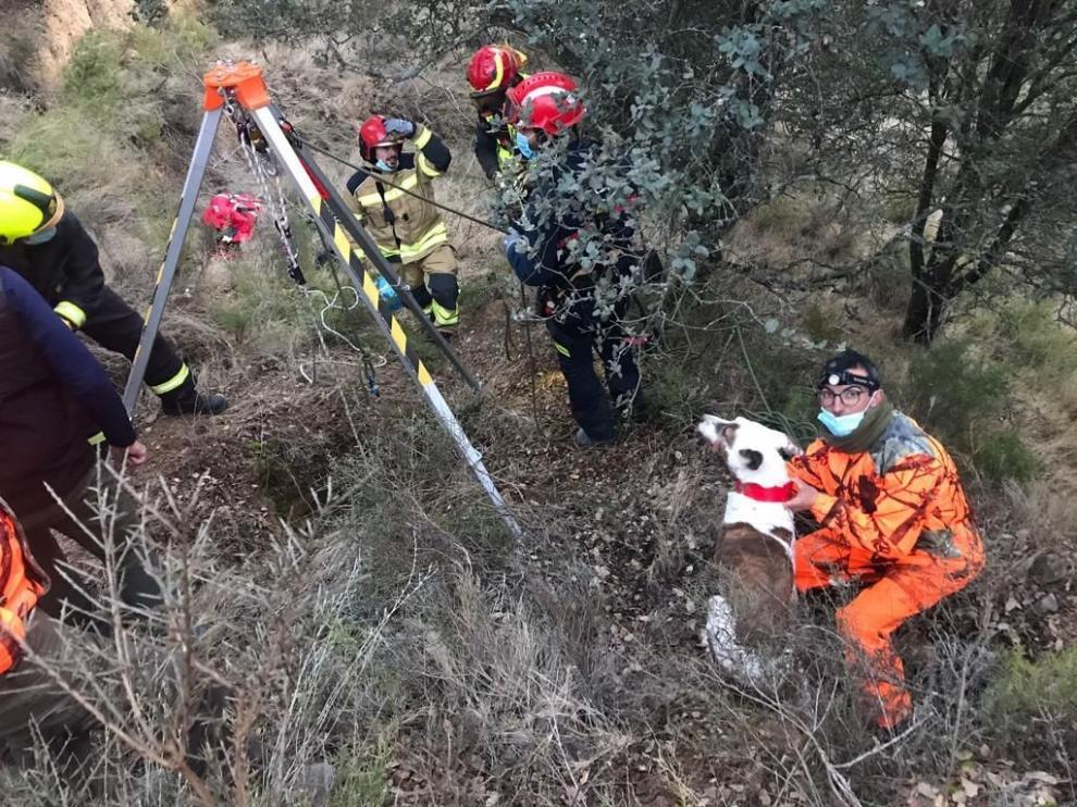 Rescatado un podenco que participaba en una batida en Secastilla tras una caída de diez metros