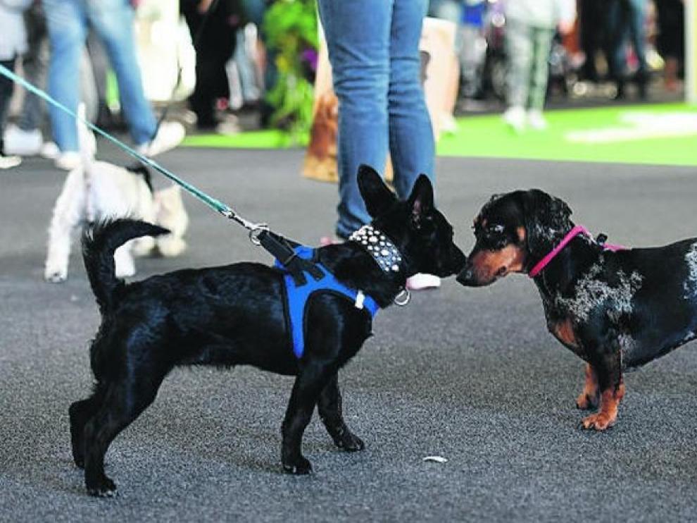 Ya es obligatorio en Huesca que los propietarios limpien los orines de sus animales