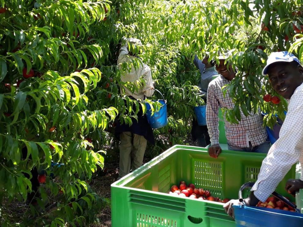 Los temporeros piden más peso específico en el sector frutícola