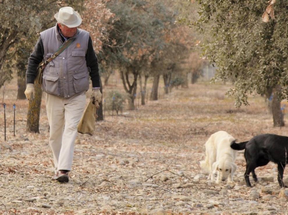 Cae la demanda de trufa en un año de menos producto y gran calidad en la provincia de Huesca