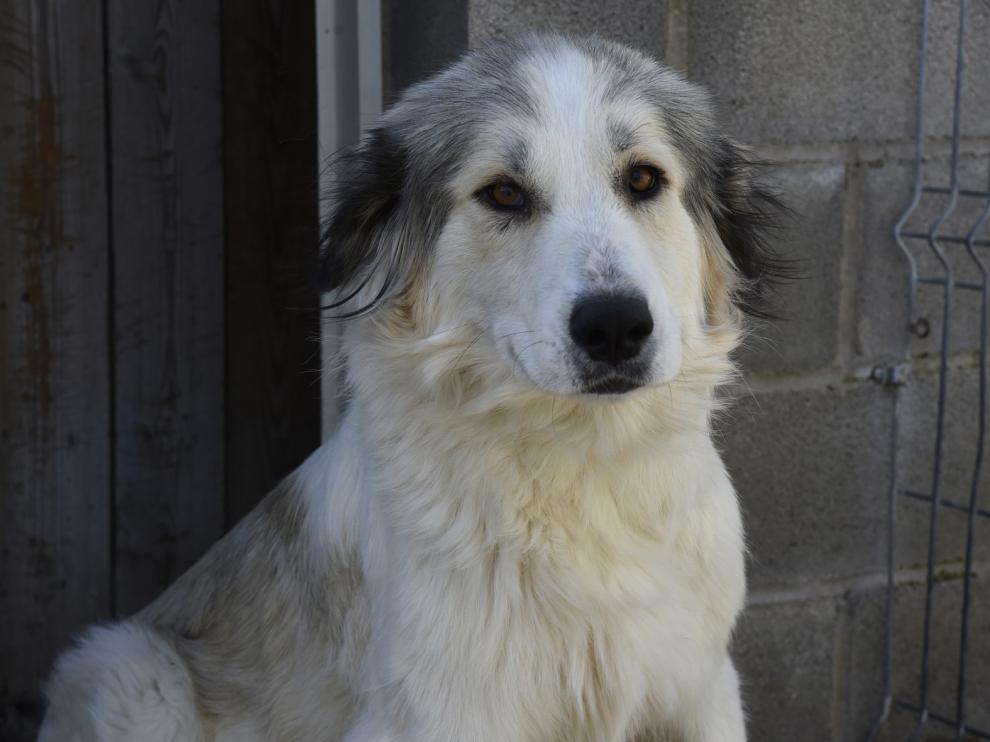 Más de 300 perros encontraron un hogar en 2020 gracias al servicio de recogida de animales de la DPH