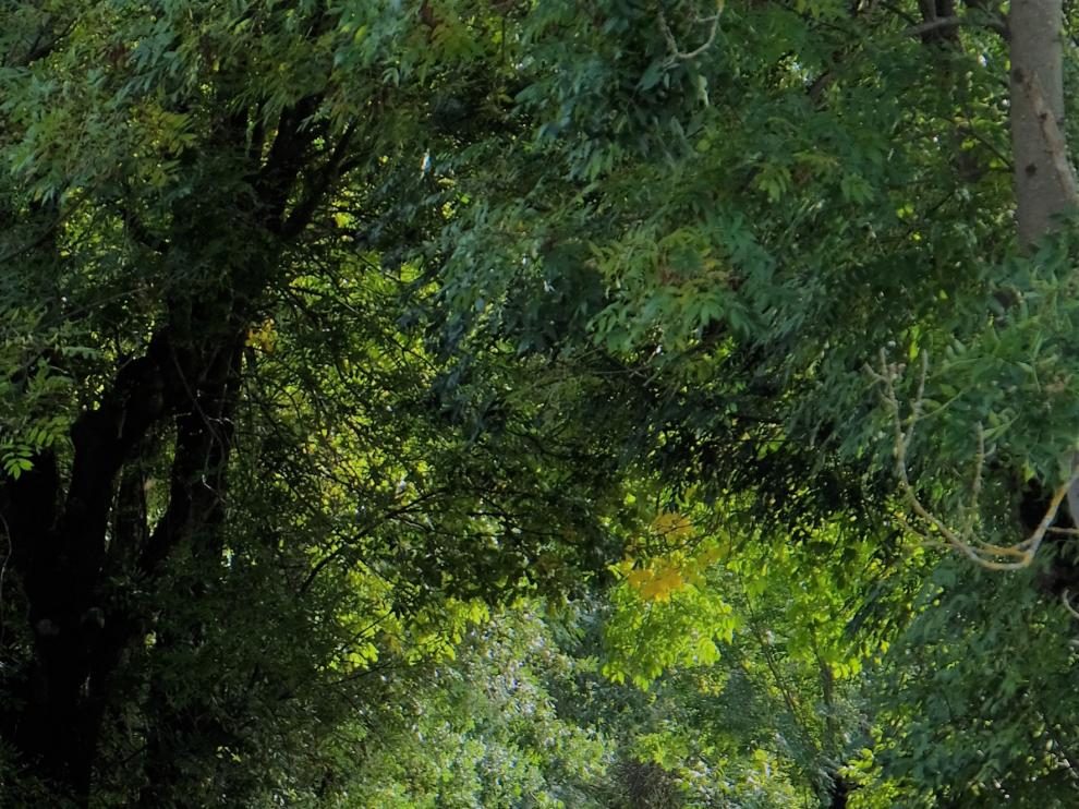 Camino del Ésera, el eje de los prodigios del valle de Benasque