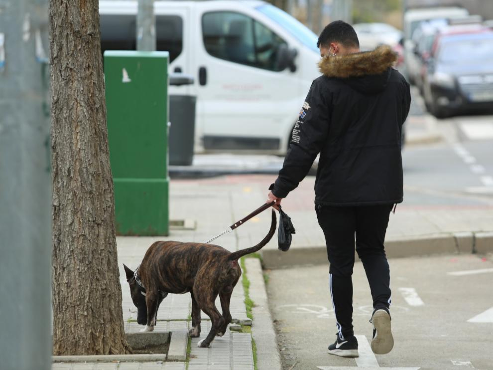 Una multa en 2019 por no recoger las heces caninas en Huesca