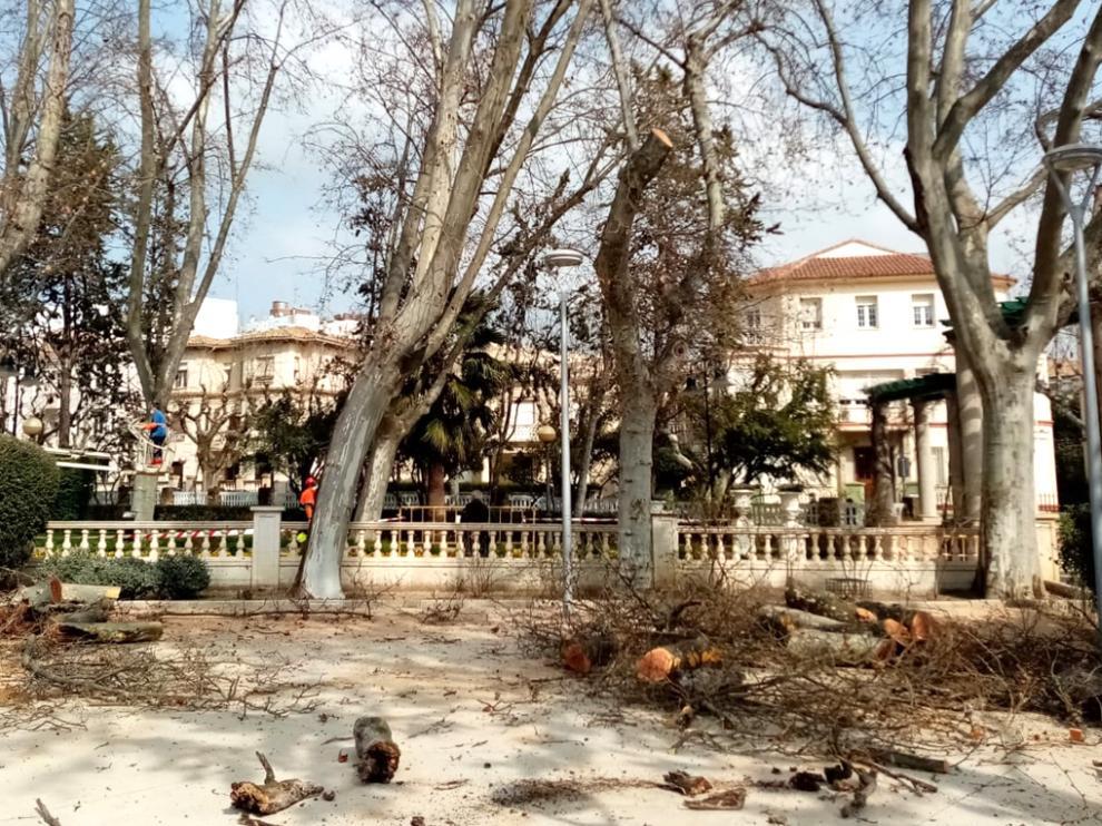 Poda de plataneros en el parque Miguel Servet de Huesca