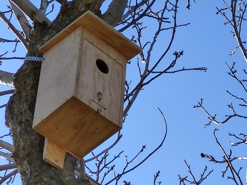 Uno de los nidos instalados