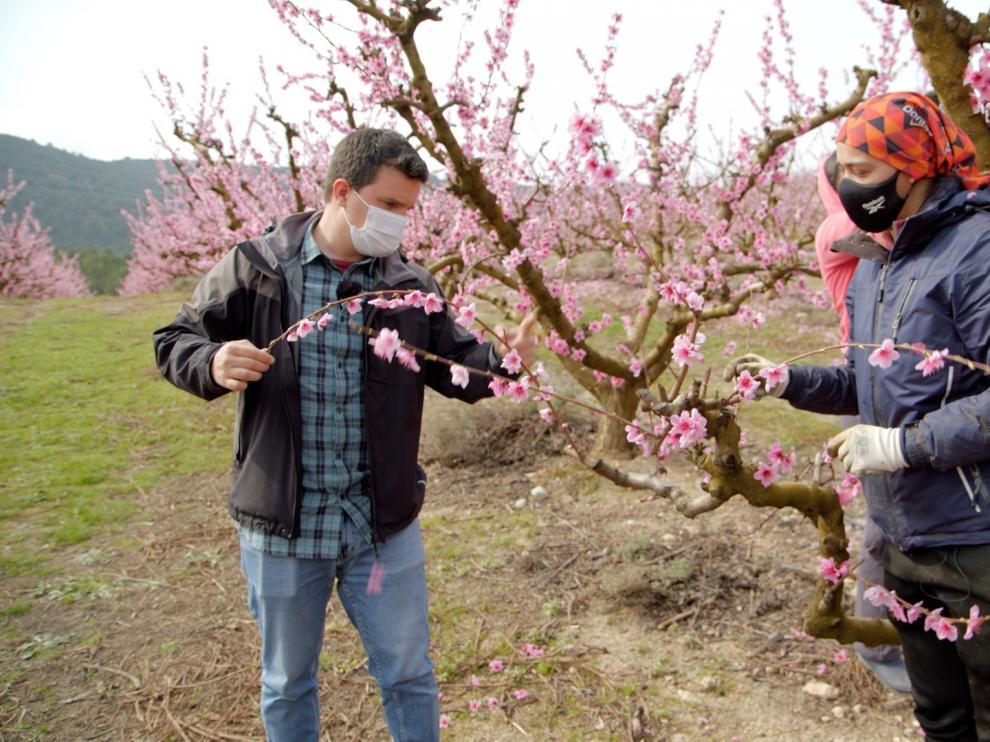 Javier Zapater en una visita a los frutales en Torrente de Cinca.