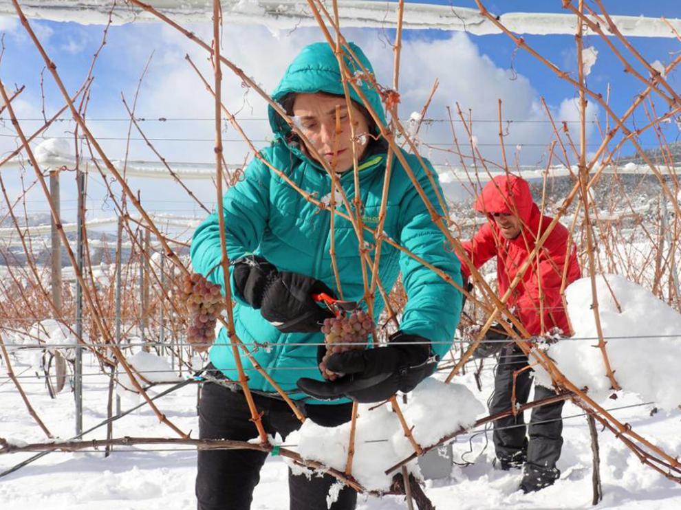 Pilar y Ernest este invierno en la primera vendimia del vino del hielo.