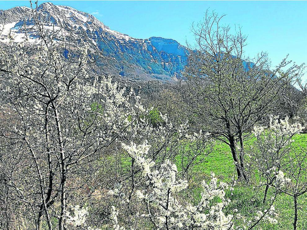 Campo Fondanolo, con los endrinos en flor, donde van a ser las visitas guiadas.