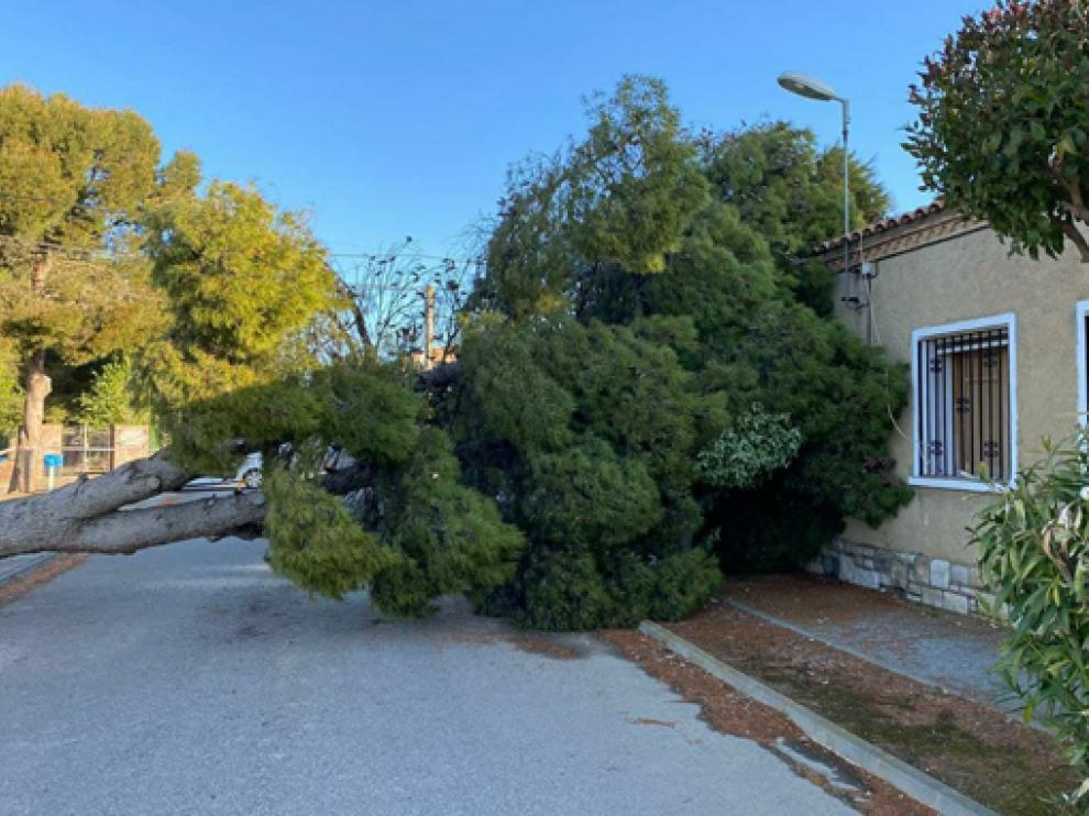 Árbol caído en Alberuela de Tubo.