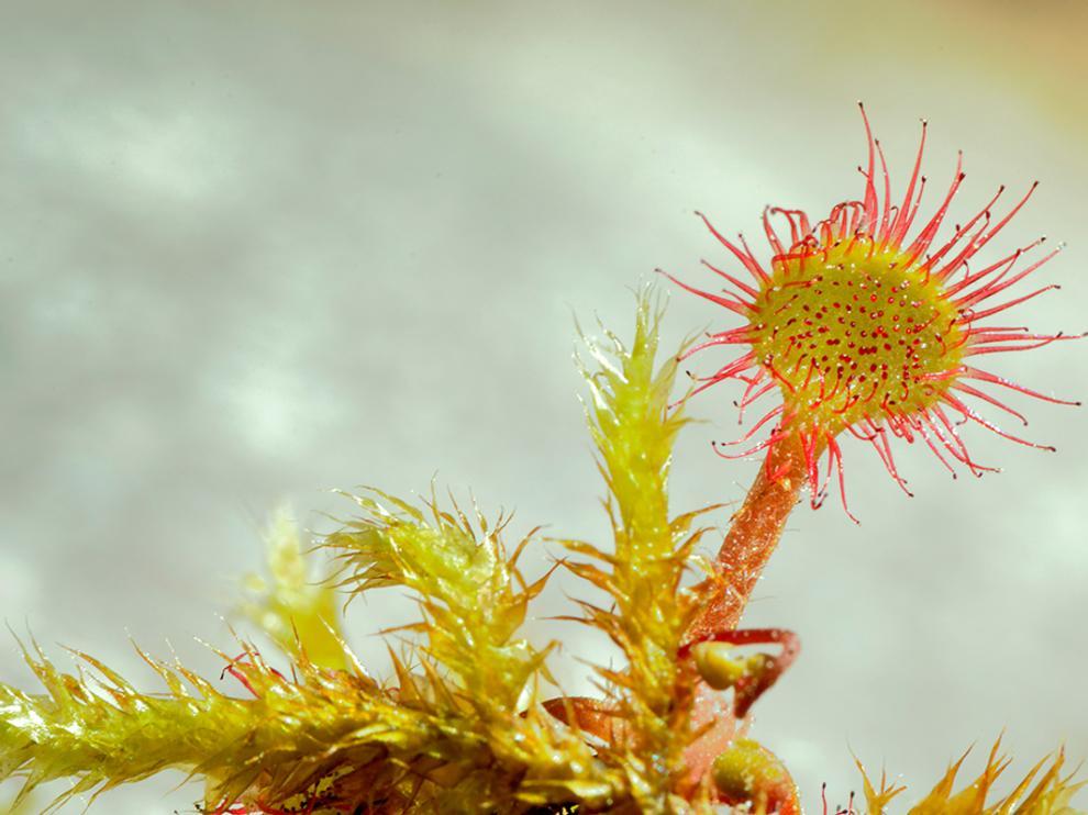 Una de las imágenes de la muestra sobre flora silvestre.