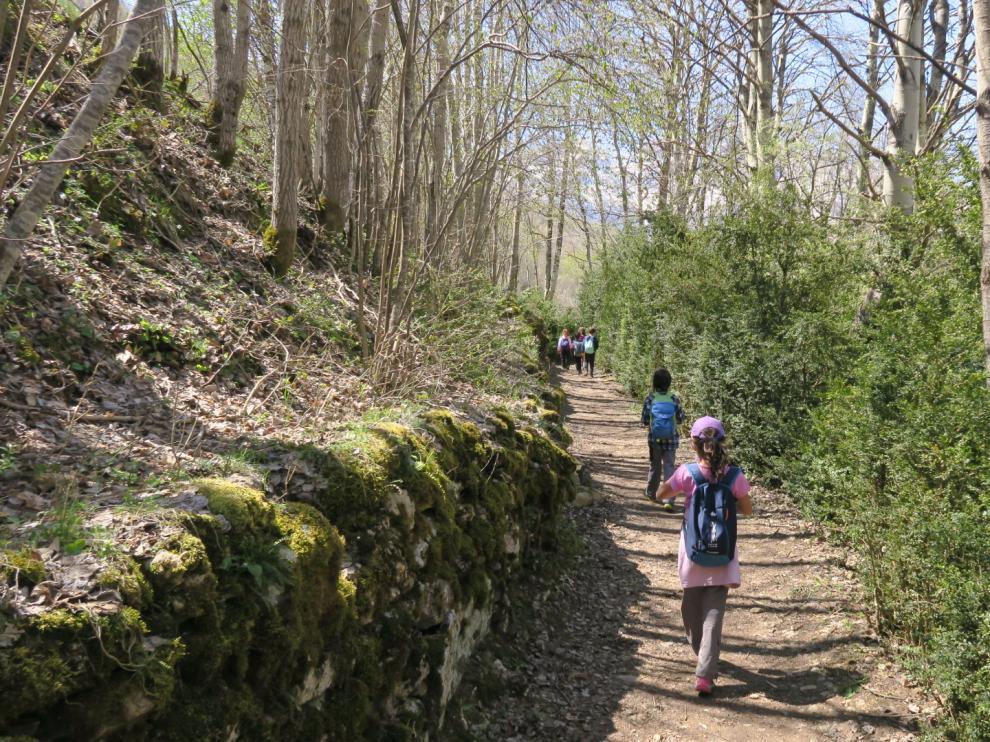 Por una de las sendas, rodeados de árboles