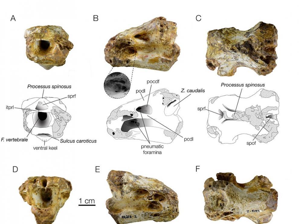 La vértebra de Biascas de Obarra