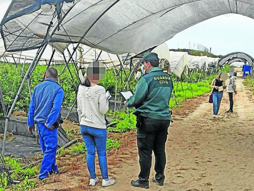 Investigación llevada a cabo por la Guardia Civil en las instalaciones de una explotación agraria.