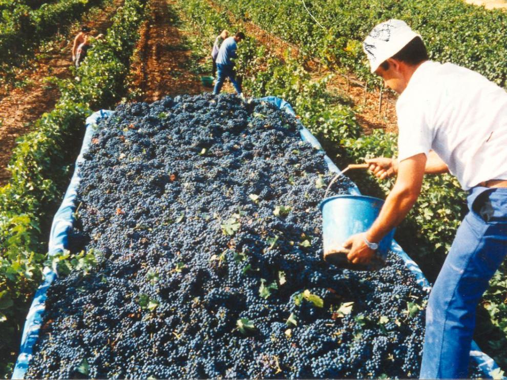 El vino, un buen referente de nuestra provincia.