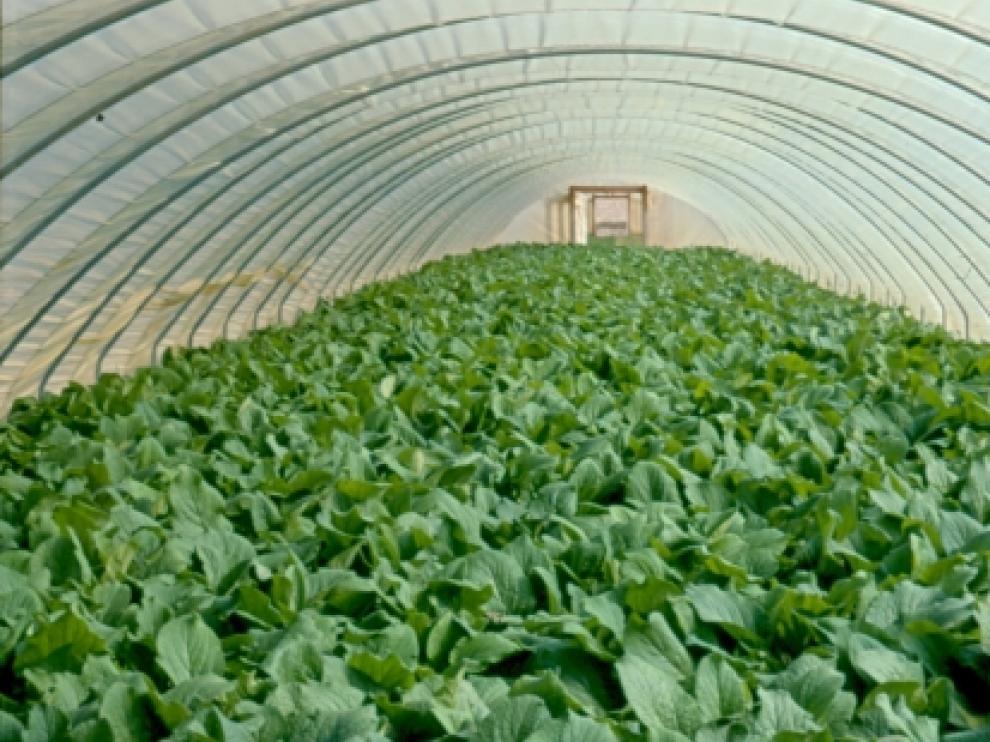 Cultivos de invernadero en Aragón